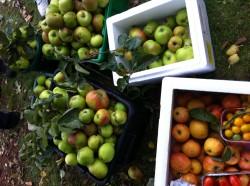 Hedgerows & Harvest