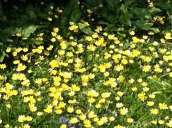 Identifying and Using Hedgerow Plants & Shrubs - South Devon AONB