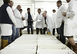 Brixham Fish Market Tours