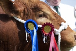 Totnes & District Agricultural Show