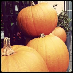 Halloween at Greenway